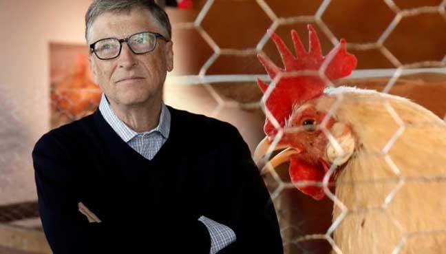Photo of Bill Gates: Uzgojem pilića protiv siromaštva