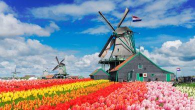 Photo of Kako je Holandija, zemlja manja od BiH, postala svjetski poljoprivredni gigant