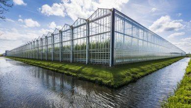 Photo of Kako Holanđani pametnim projektovanjem hrane čitav svijet